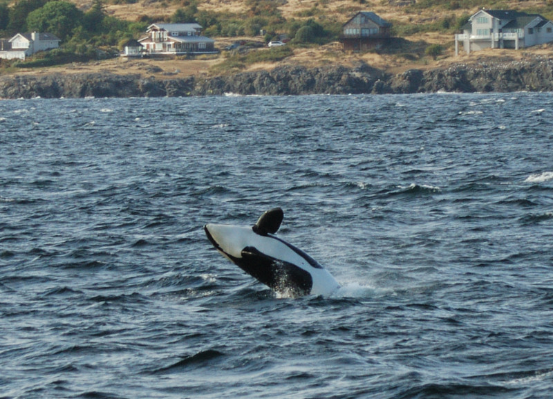 whale6a.jpg
