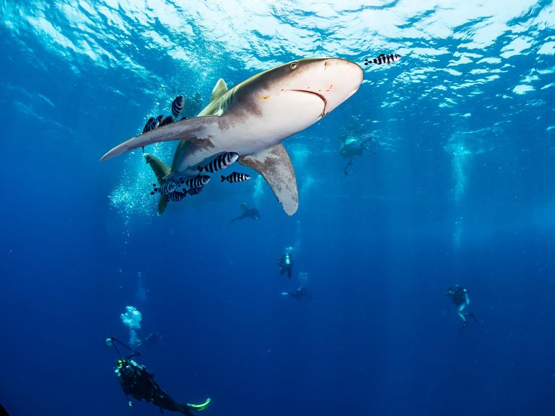 SharkQuest_29Jun18_0404.jpg