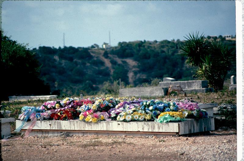 Anguilla_025.jpg