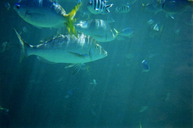 fish_6.jpg