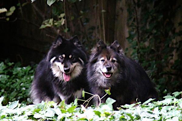 Koda and Onni