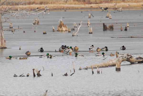 Oneal Lake 2011