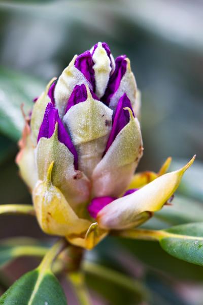 160520_06_6321_Flowers-1.jpg