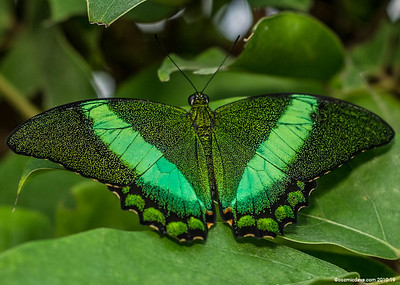 Butterfly Slideshow