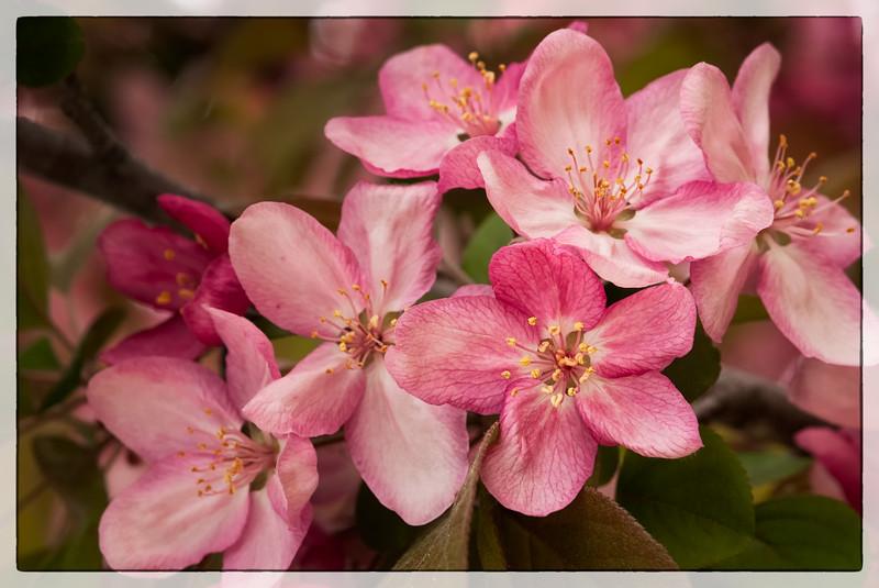 Cherry_Blossoms_032012-154-Edit.jpg