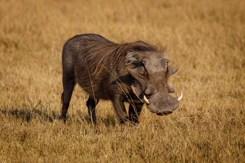 Botswana_0818_PSokol-1324.jpg
