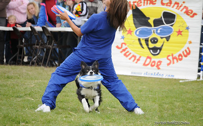 Alaska Fair Extreme Stunt Dog show
