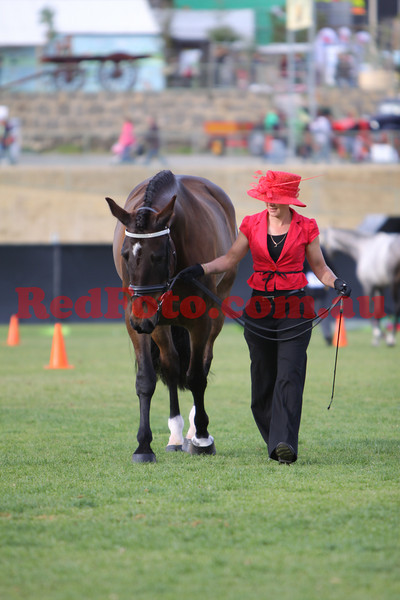 2009 09 28 Perth Royal Show Cleveland Bay