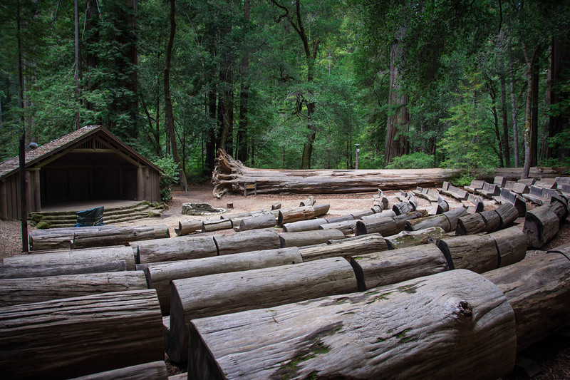 Redwood-69.jpg