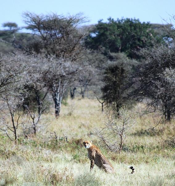 Serengeti (139).JPG