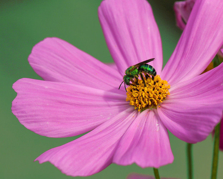 Flower with Green Fly, green background