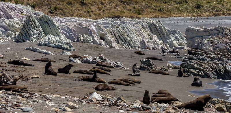 Das Strandbad der Seebären