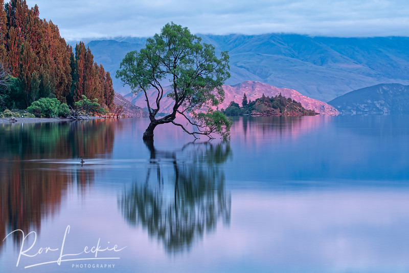 """That Tree"" at Lake Wanaka, New Zealand - sunrise"