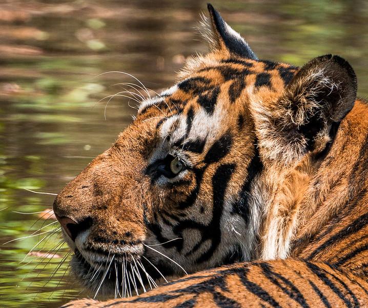 India_April_2019-1070.jpg