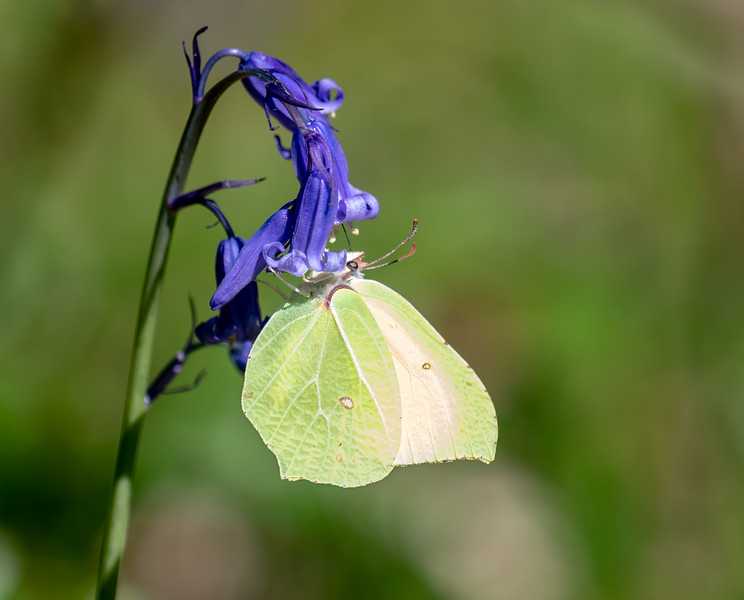 Ebernoe Common-12.jpg