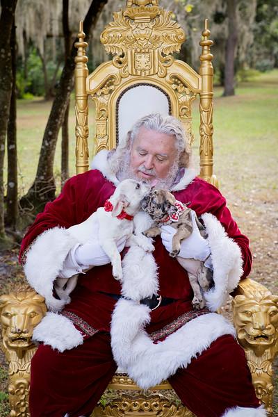 Santa Minis 2018: Santa and the Puppies!
