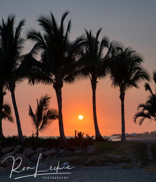 Sunset through the palms