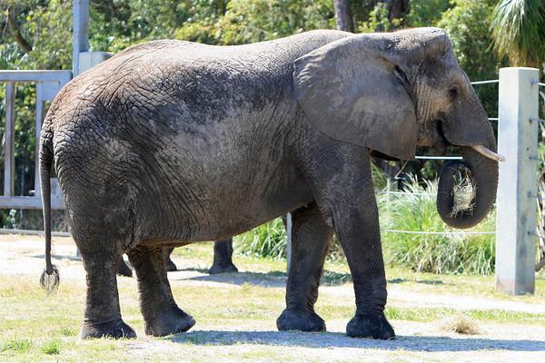 03/02/2008 - Jacksonville Zoo