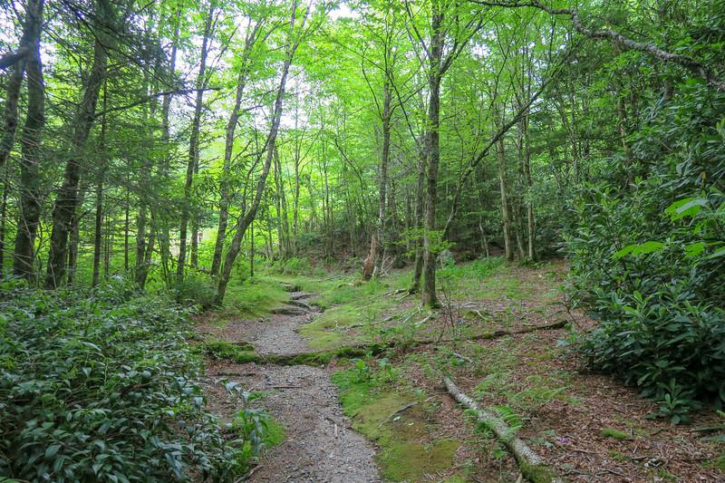 Mountains-to-Sea Trail -- 5,110'