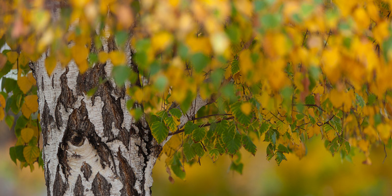 fall-color-1.jpg