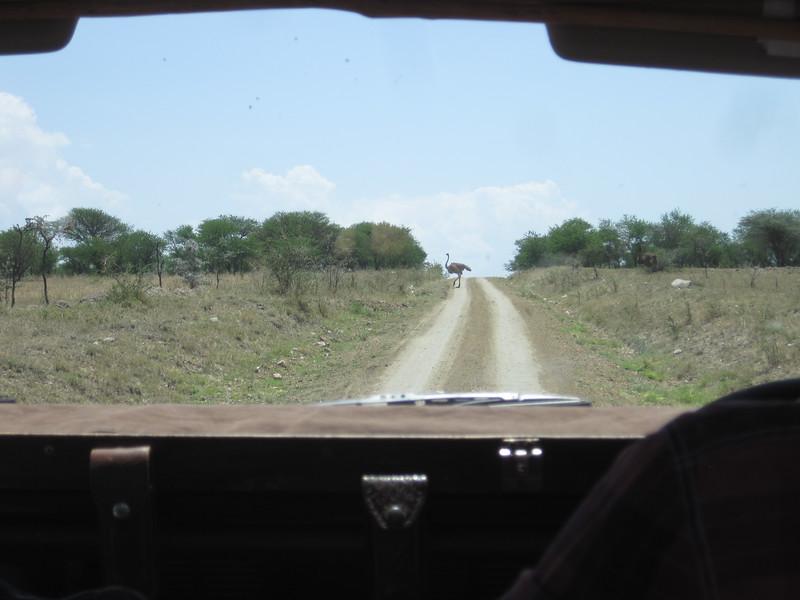 Tanzania14-3609.jpg