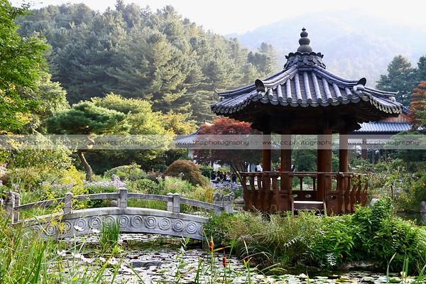 SOUTH KOREA: Nami Island + Petite France + Garden of the Morning Calm