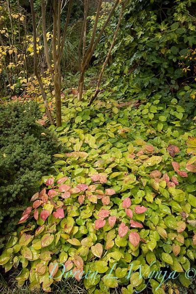 Dietrick fall garden_2104.jpg