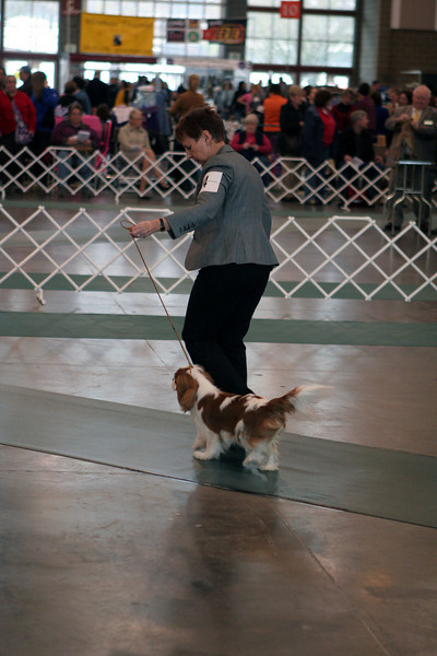 Puyallup Dog Show January 2010