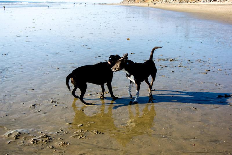 dogs_beach-4.jpg