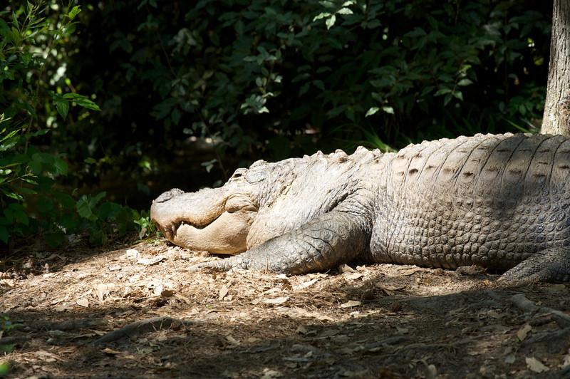 Zoo_Trip_45.jpg