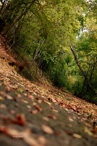 Lanana Creek036