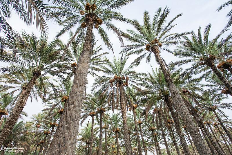palm tree (4).jpg