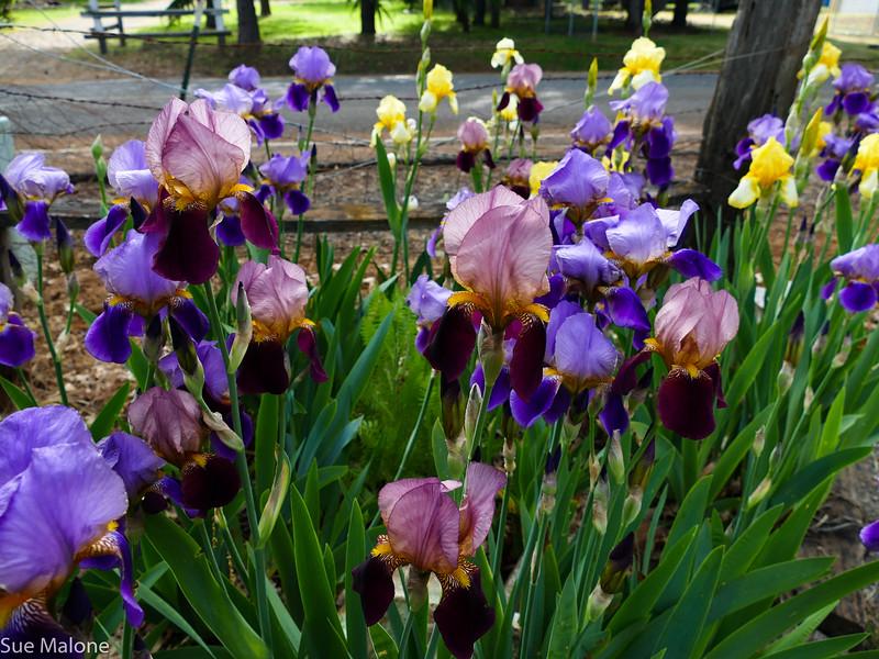 morning flowers (5 of 10).jpg