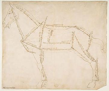 Andrea del Verrocchio  measure dwg horse 1480.jpg