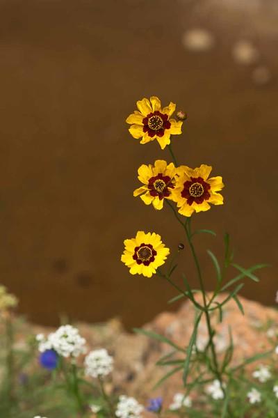 Colorado Springs-96x.jpg
