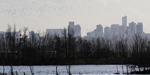 vogels-ackerdijk-2016-1