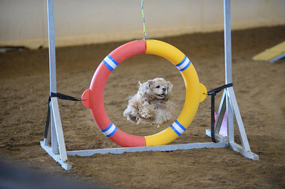 TBAC AKC Agility Trial September5-6