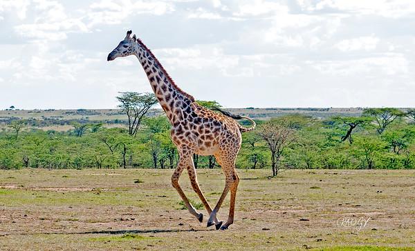 Kenya_2018