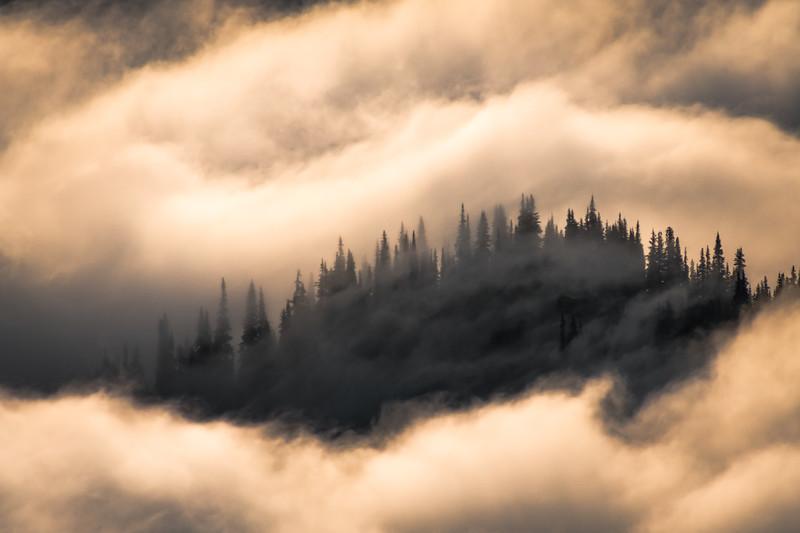 Golden Forest Fog Silhouette -  Finalized Proof - 11-25-19.jpg