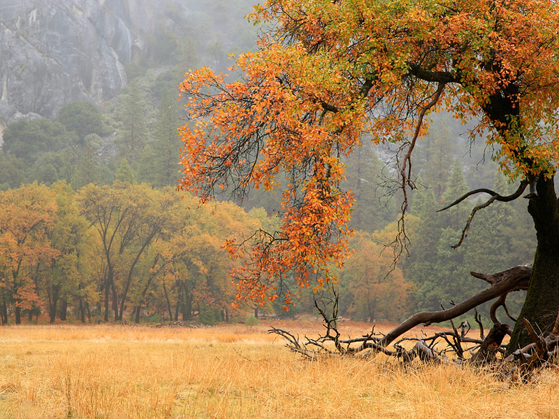Yosemite_Fall Grove.jpg