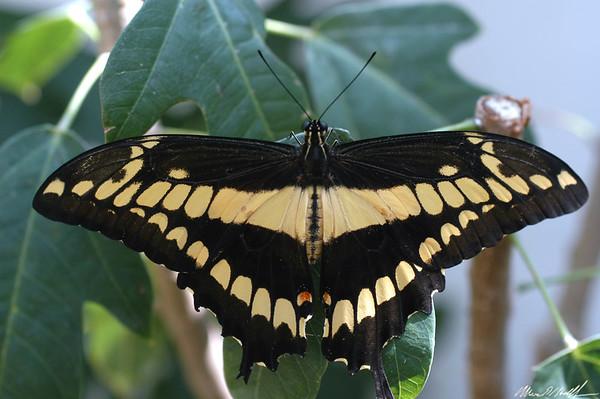 Butterfly Conservatory, Key West FL