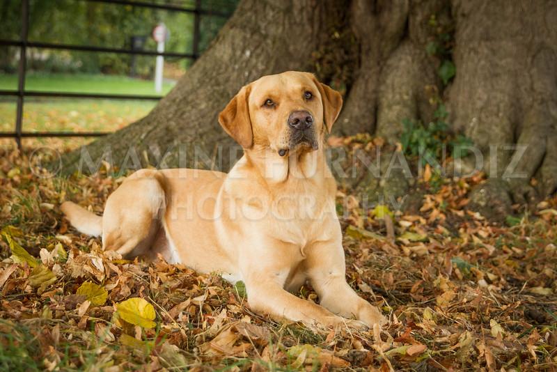 Pips Dogs Autumn-6741.jpg