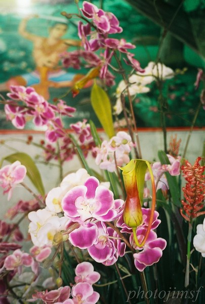 james98-R4-025-11 Phomz temple orchids wm.jpg