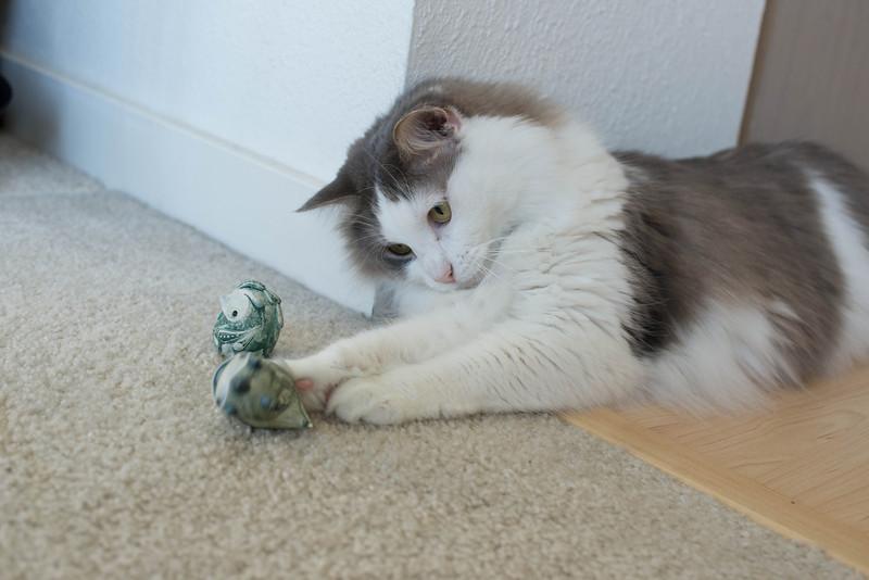 Mokono_Sloke_And_The_Kitty-17