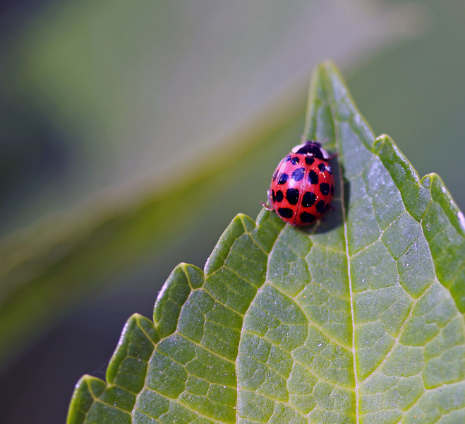 lady bug wild 6.jpg