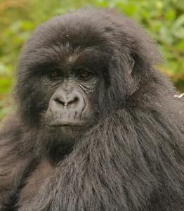 East African Safari 2008