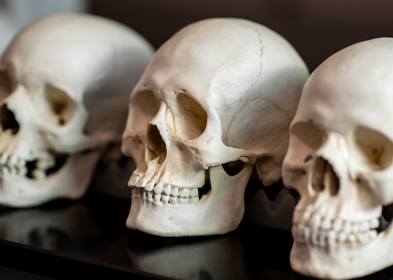 2019_0214-ForensicAnthropology-ED-4554.jpg
