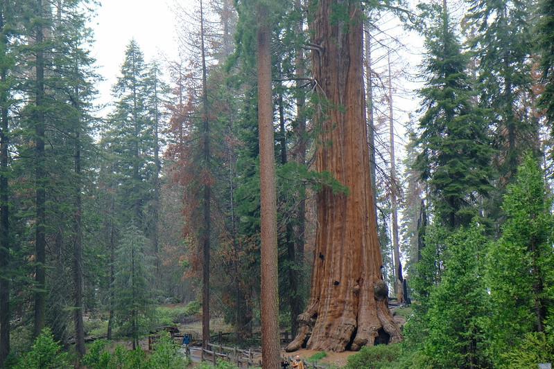 California Day 6 Sequoia 05-30-2017 165.JPG