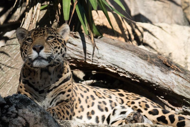 JAX Zoo 2020-36.jpg
