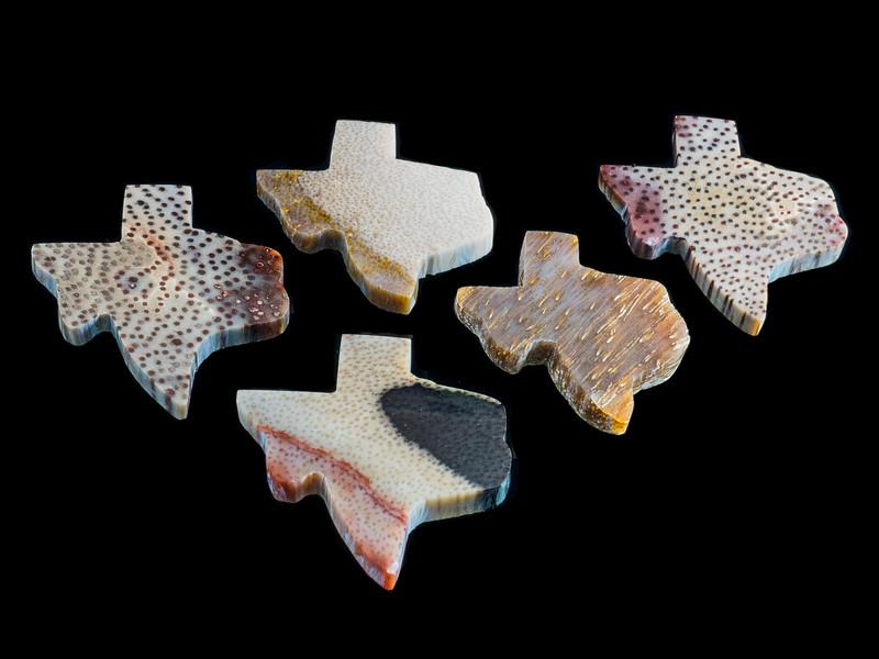 Petrified Palmwood Cabachon Selection -  State Stone of Texas